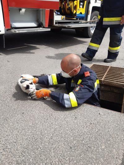 Tierrettung – Katze im Schacht